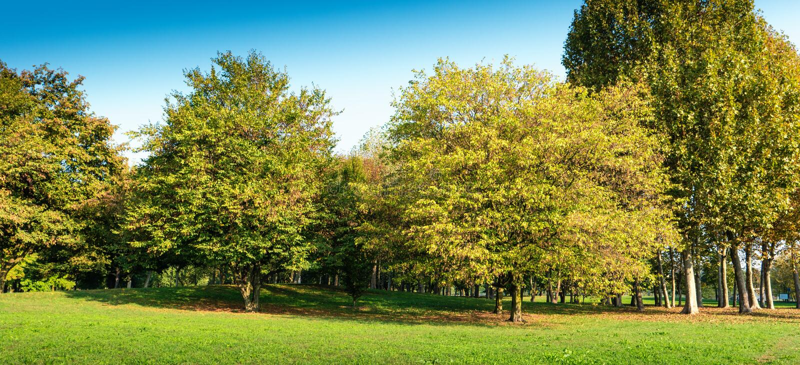 Lugar quieto com grama e árvores foto de stock