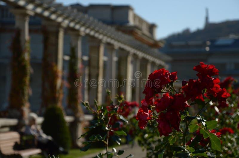 Lugar romántico secreto y rosas rojas fotos de archivo libres de regalías