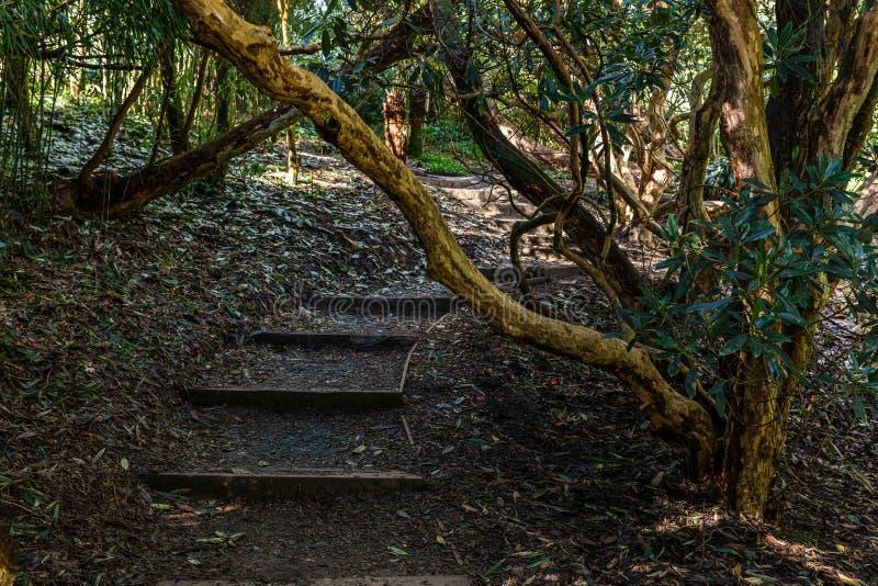 Lugar sombrío en el parque fotos de archivo libres de regalías