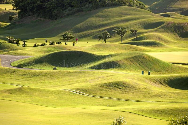 Lugar verde com verde agradável fotografia de stock royalty free