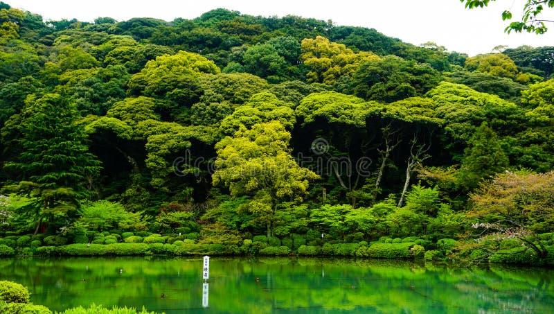 Lugar verde de la reflexión fotos de archivo libres de regalías