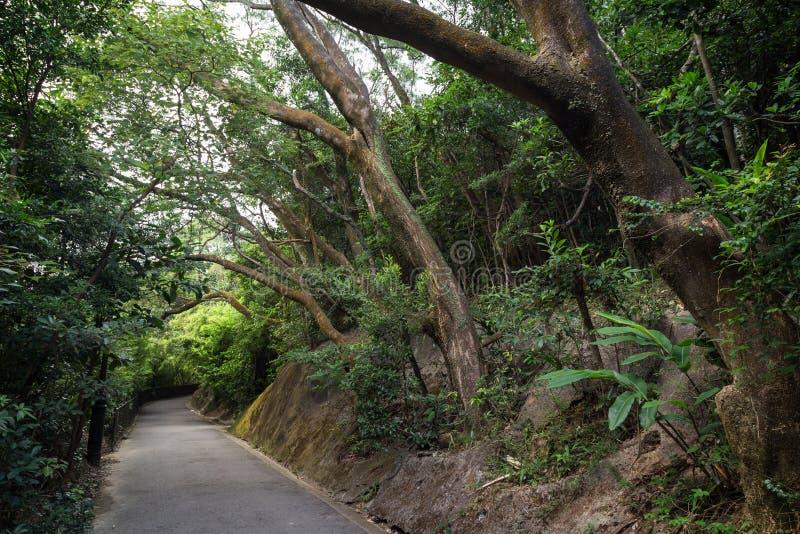 Lugard-Straße an der Spitze in Hong Kong lizenzfreie stockfotografie