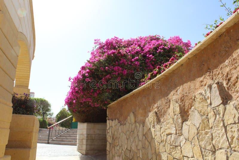 Lugares hermosos en Egipto foto de archivo libre de regalías