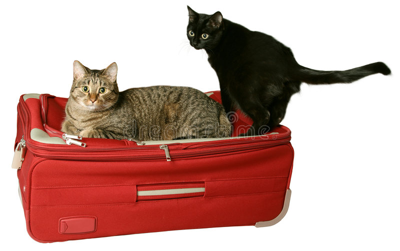 Luggage under protection stock photography