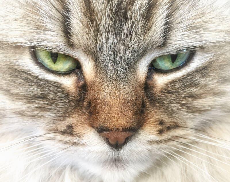 Lugna avkopplad katt i förgrunden arkivbilder