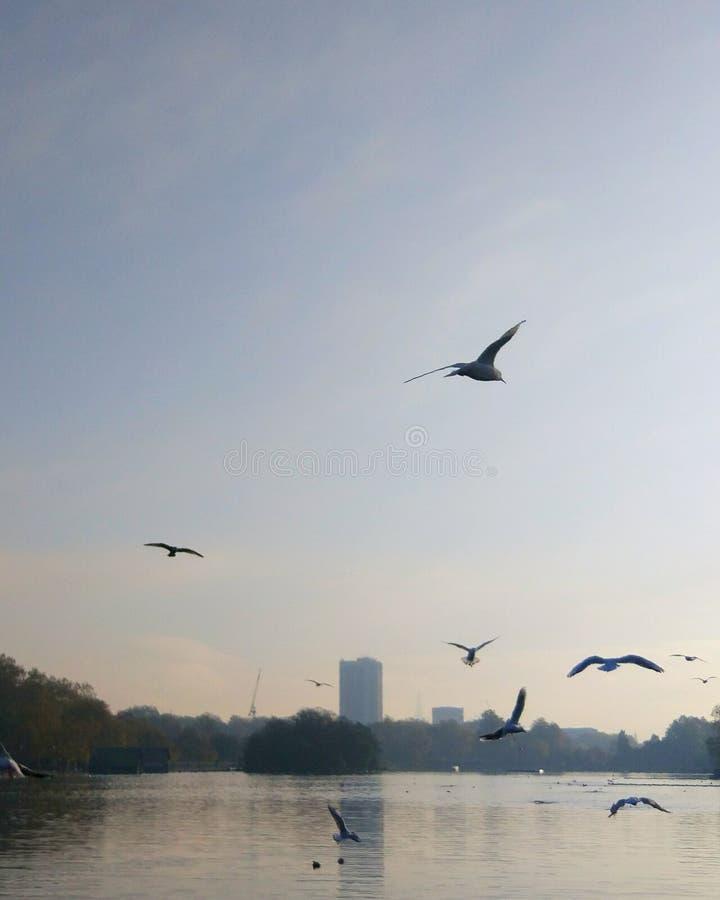 Lugna beatifullsjö för Hyde Park arkivbild