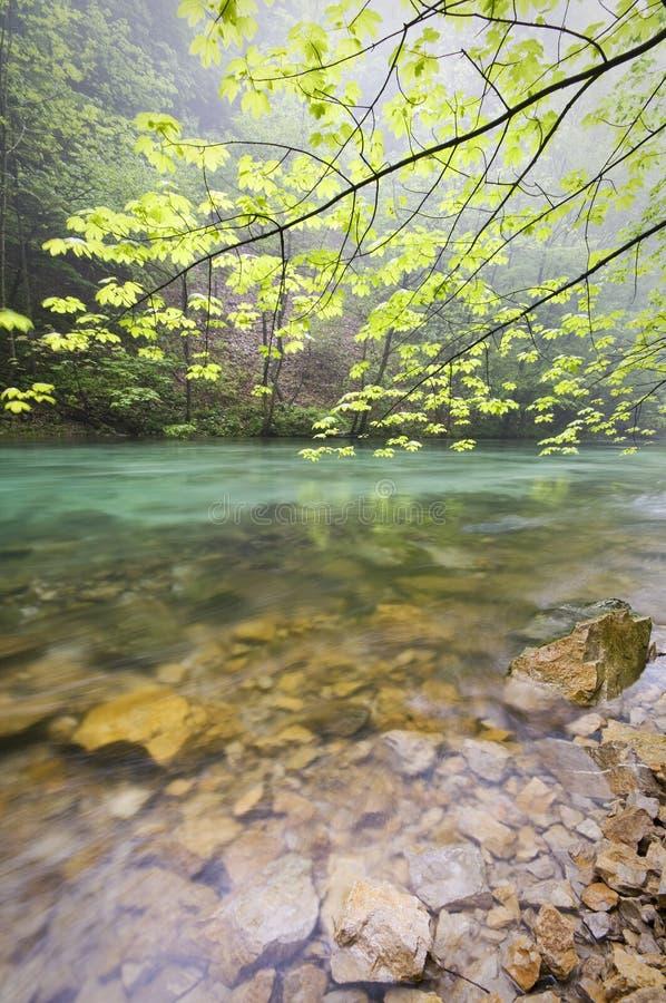 lugna flod royaltyfri bild