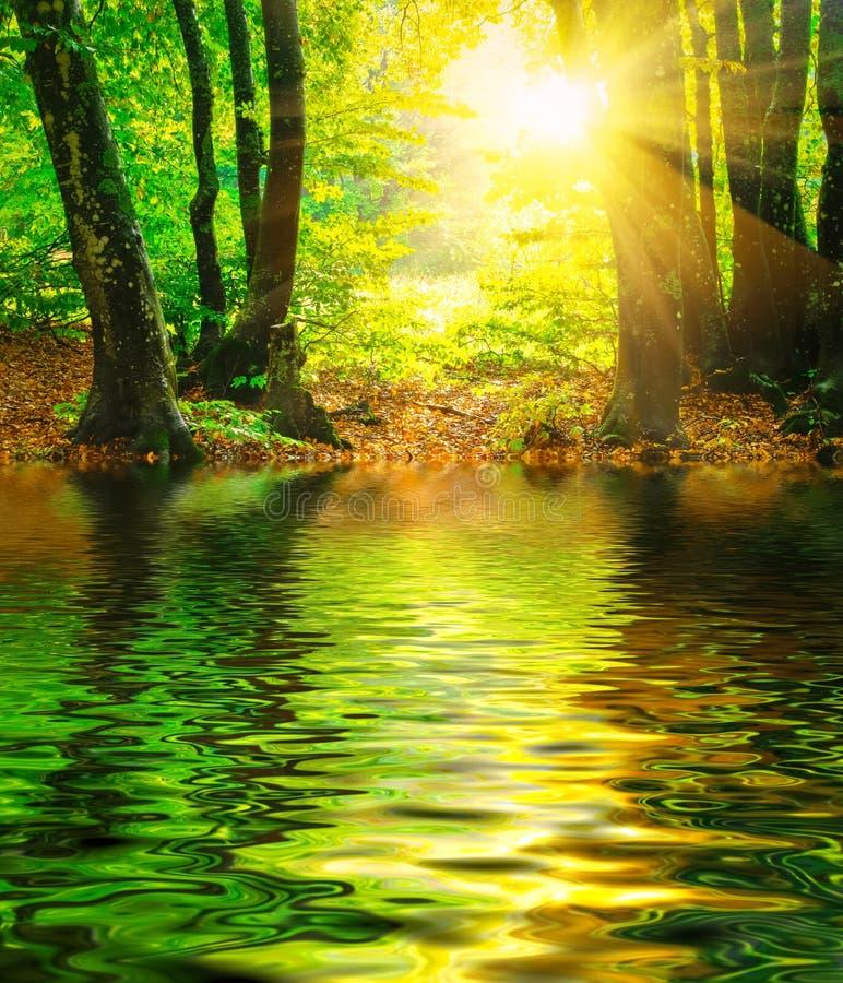 Lugna flod, solstrålar i solig vårskog royaltyfri bild
