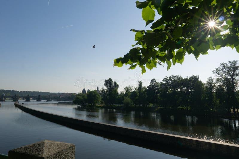 Lugna flod under morgonsolen Solsignalljus till och med den gröna lövverket av träd F?geln flyger ?ver vattnet royaltyfria bilder