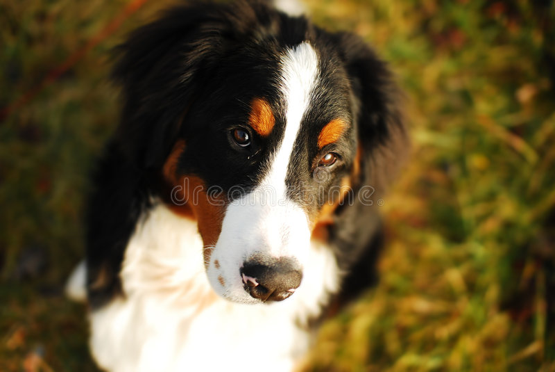 lugna hund royaltyfria foton