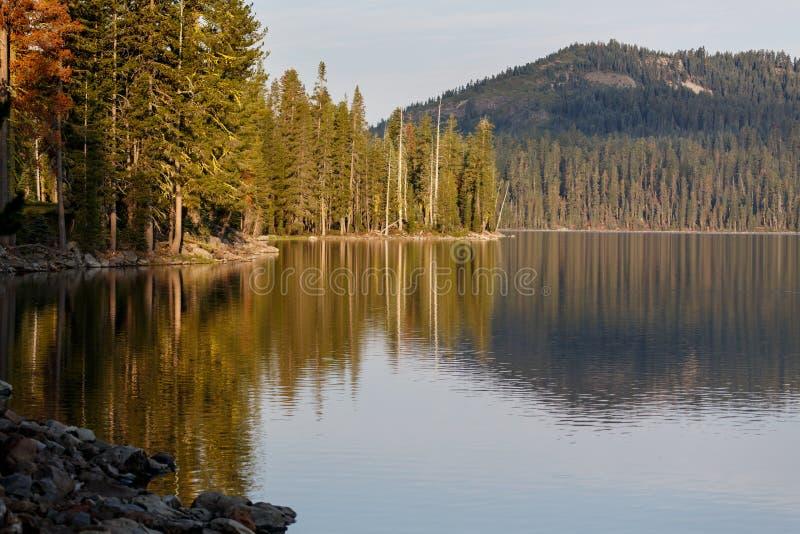 Lugna shoreline av den alpina sjön med reflexioner av skogen och berg royaltyfri foto