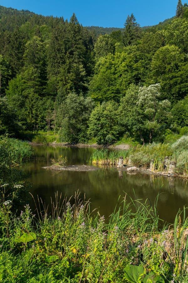 Lugna växt av bergfloden Ett ställe för rekreation och fiske arkivbilder