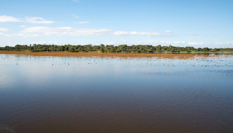 Lugna våtmarkvatten royaltyfri foto