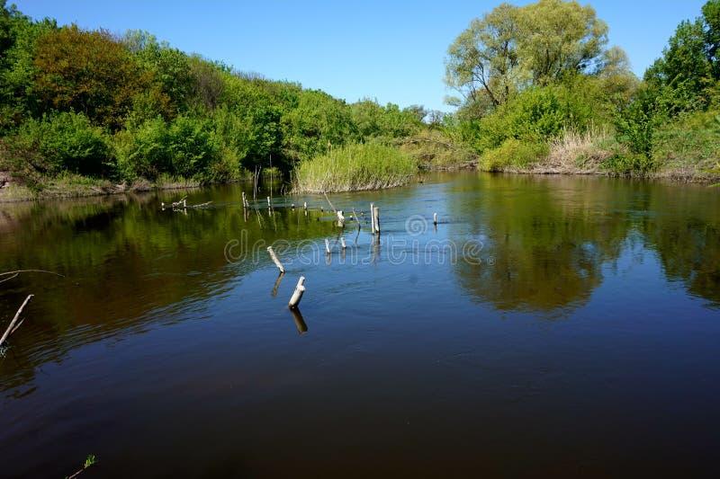 Lugna vatten av en smal flod Ovanför yttersidan är en hemlagad fördämning som göras av pinnar och bräden fotografering för bildbyråer