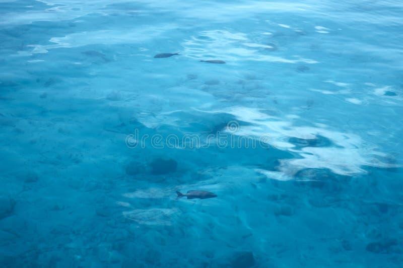 lugnat surface vatten royaltyfri fotografi