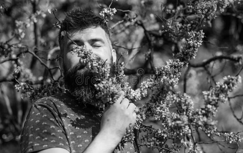 Lugnbegrepp Mannen med skägget och mustaschen på fridsam framsida nära blommar på solig dag Hipsteren tycker om arom av royaltyfria foton
