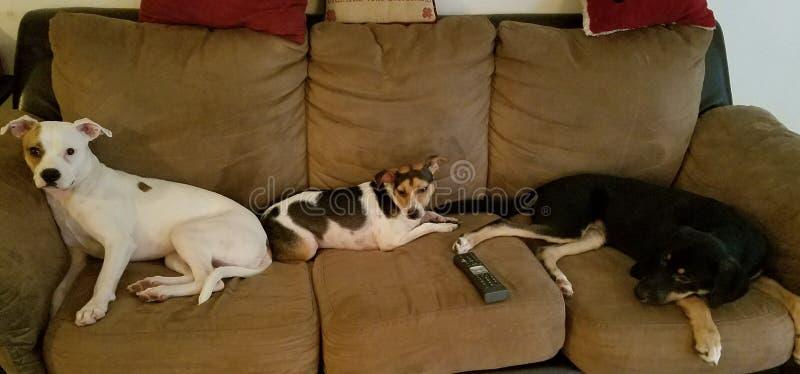 Luie honden op de laag royalty-vrije stock afbeelding