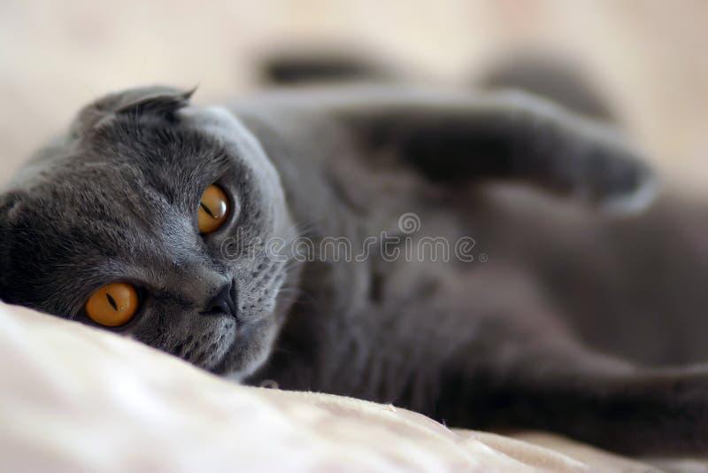 Luie kat stock afbeelding