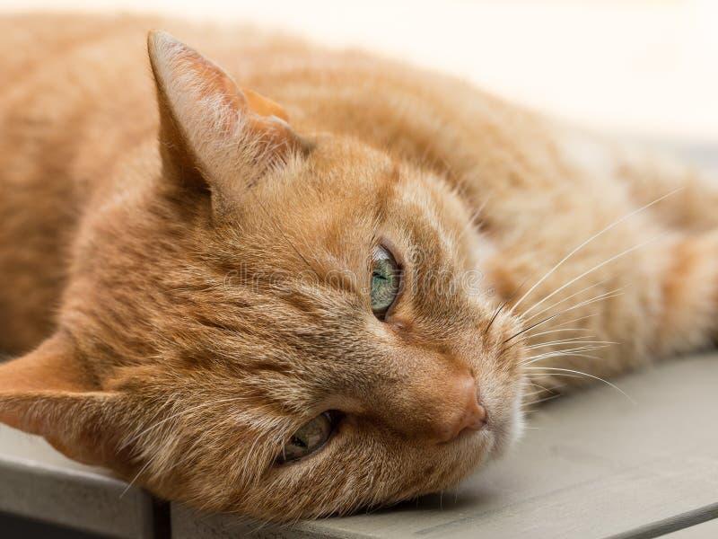 Luie oranje vrouwelijke kat die op tabel liggen stock fotografie