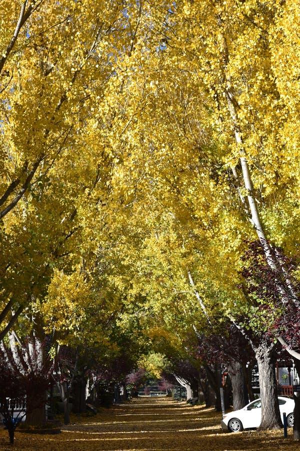 Luifel van dalingskleuren en straat in bladeren worden behandeld dat stock fotografie
