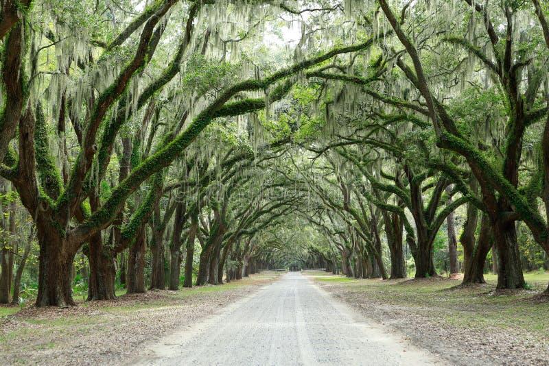 Luifel van eiken bomen die in mos worden behandeld Forsythpark, Savanne, Geo royalty-vrije stock foto