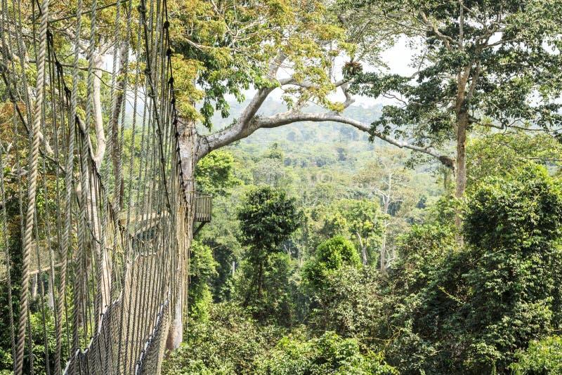 Luifelgangen In Tropisch Regenwoud Het Nationale Park Van