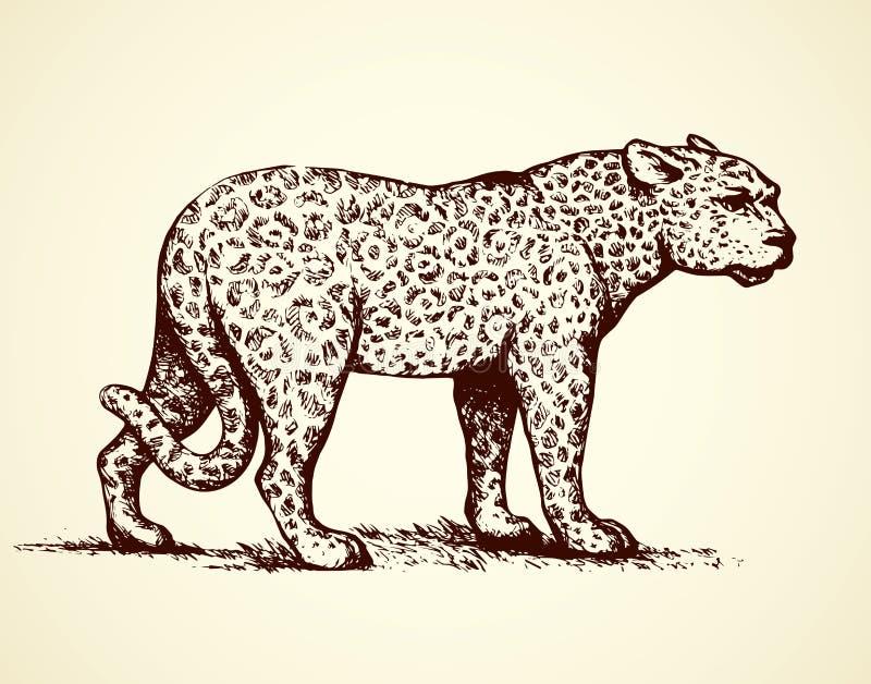 Luipaard Vector illustratie stock illustratie
