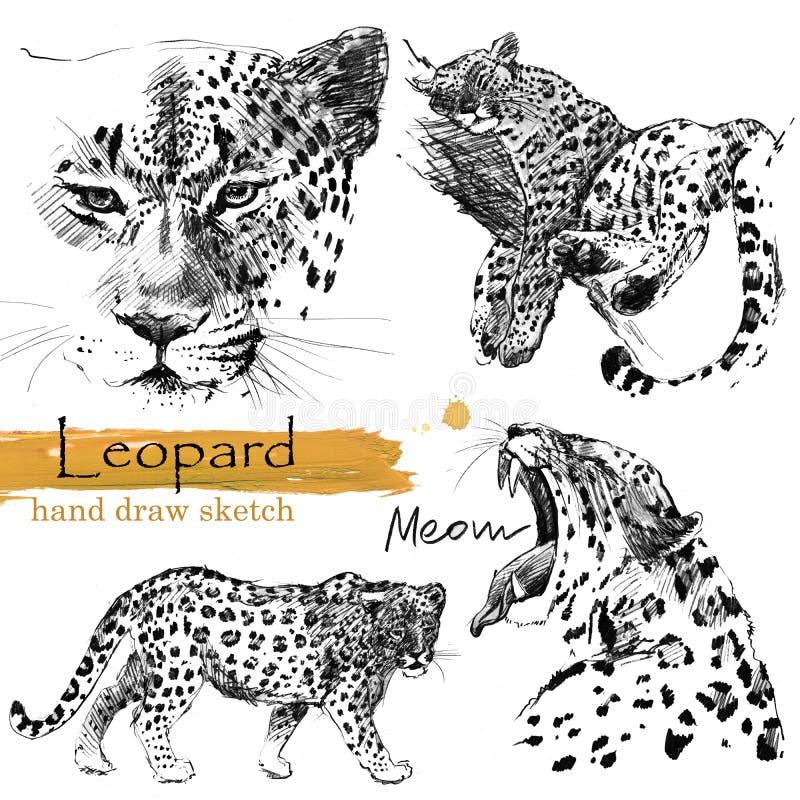 Luipaardschets Wilde dierlijke illustratie royalty-vrije illustratie