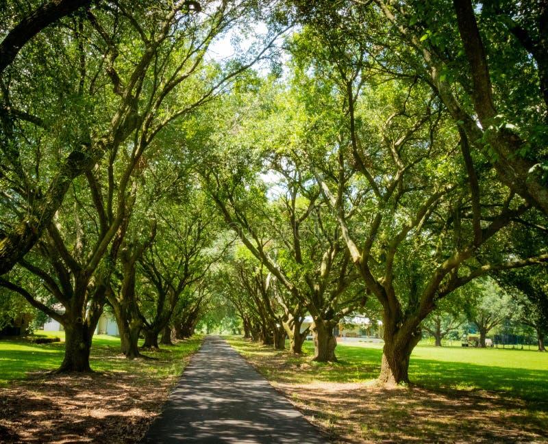 Luizjana krajobrazu rzędy drzewa zdjęcia stock