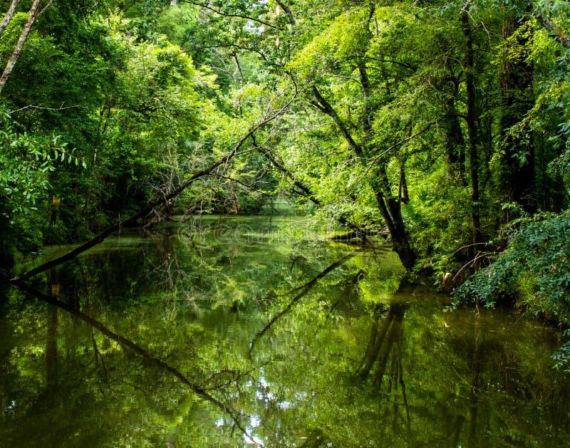 Luizjana zieleni zalewisko fotografia stock