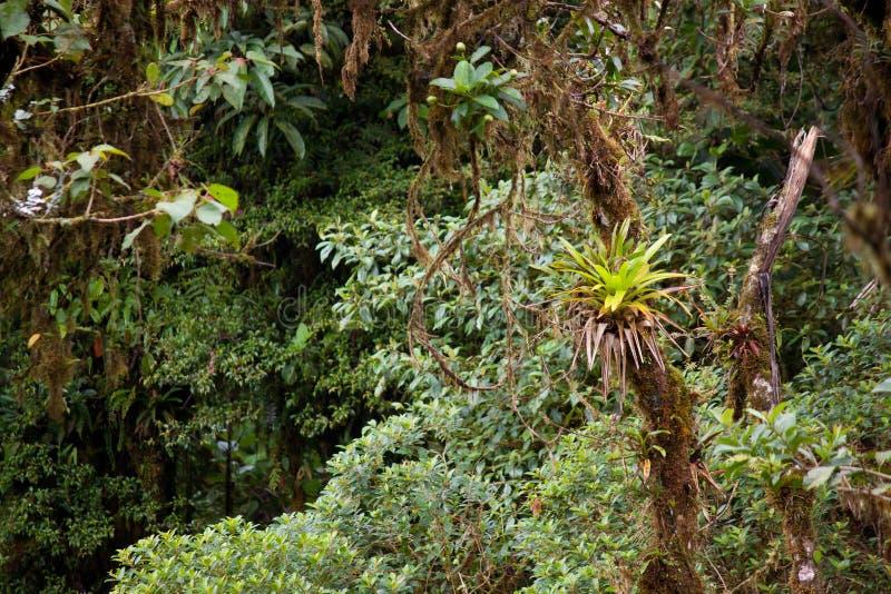 Luksusowa dżungli roślinność w tropikalnym lesie deszczowym obraz royalty free
