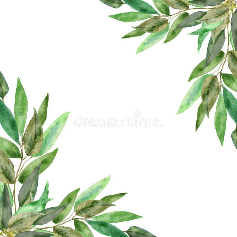 Luksusowa eukaliptus rama na białym tle Akwareli gałąź i świezi eukaliptusowi liście Ręki malować lecznicze rośliny dla ilustracja wektor