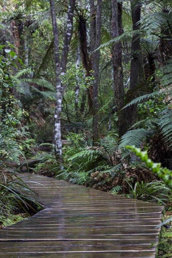 Luksusowa lasowa chodząca ścieżka zdjęcie stock