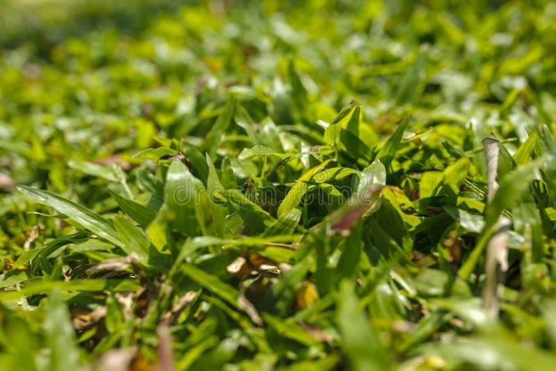 Luksusowa zielona trawa przy słonecznym dniem zdjęcia royalty free