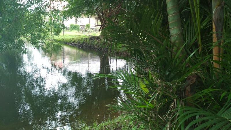 Luksusowi drzewa piękny jezioro Batów drzewa zbliżają pięknego jezioro obrazy stock