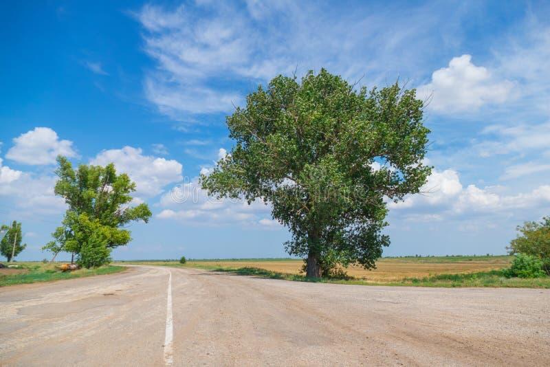 Luksusowi drzewa przy rozdrożami zdjęcia stock