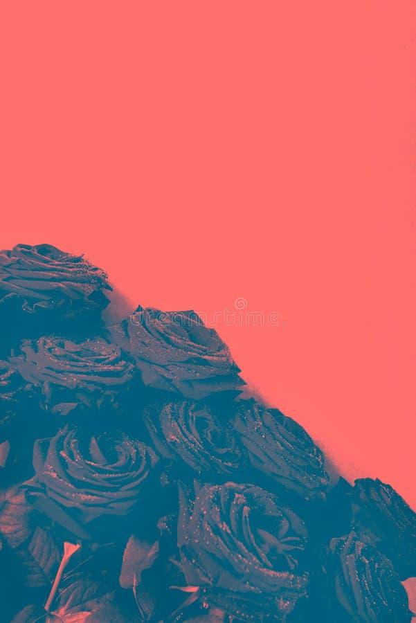 Luksusowy bukiet robić czerwone róże, duotone wizerunek obrazy stock