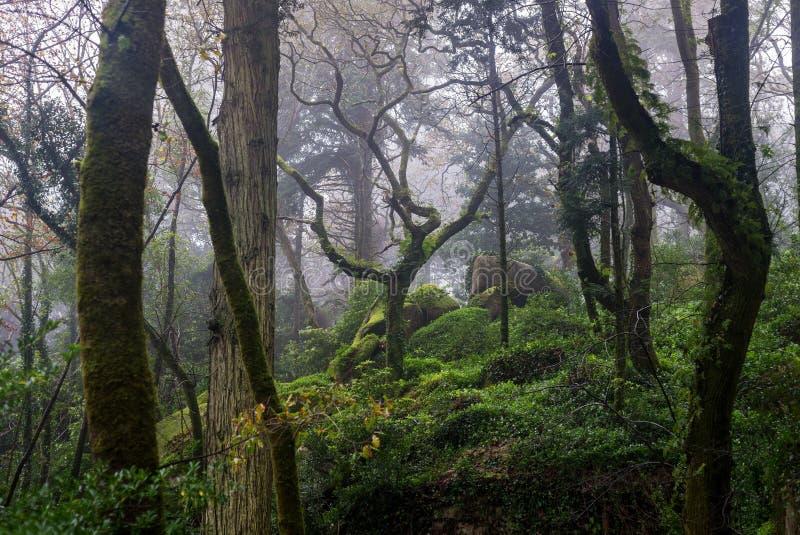 Luksusowy las po deszczu fotografia stock