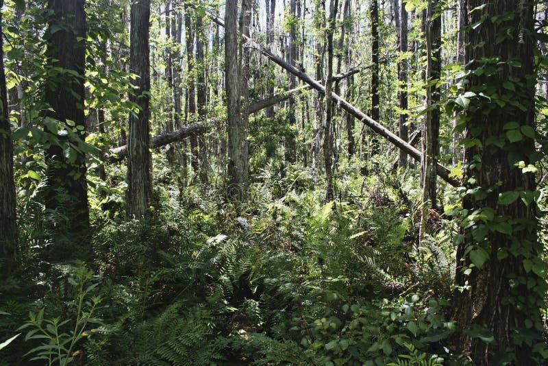 luksusowy tropikalny las obraz stock