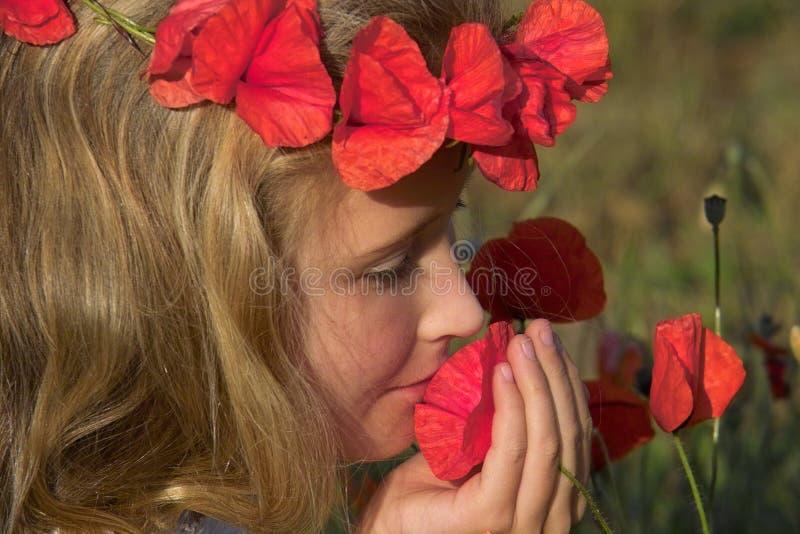 lukta för vallmor royaltyfri foto