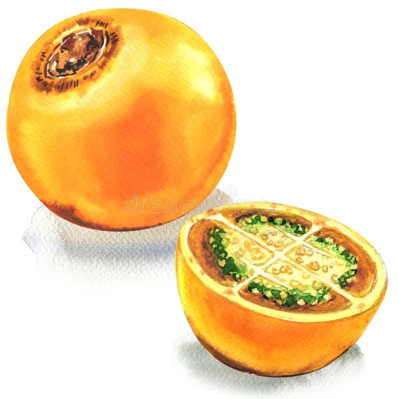 Lulo tropikalna żółta owoc, Solanum quitoense, cały, i połówka odizolowywająca, akwareli ilustracja na bielu fotografia royalty free