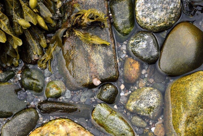 Lumaca della roccia su una roccia fotografia stock libera da diritti