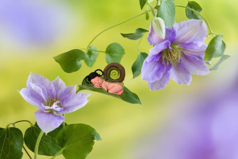 Lumaca di bambino sul fiore della clematide immagini stock libere da diritti