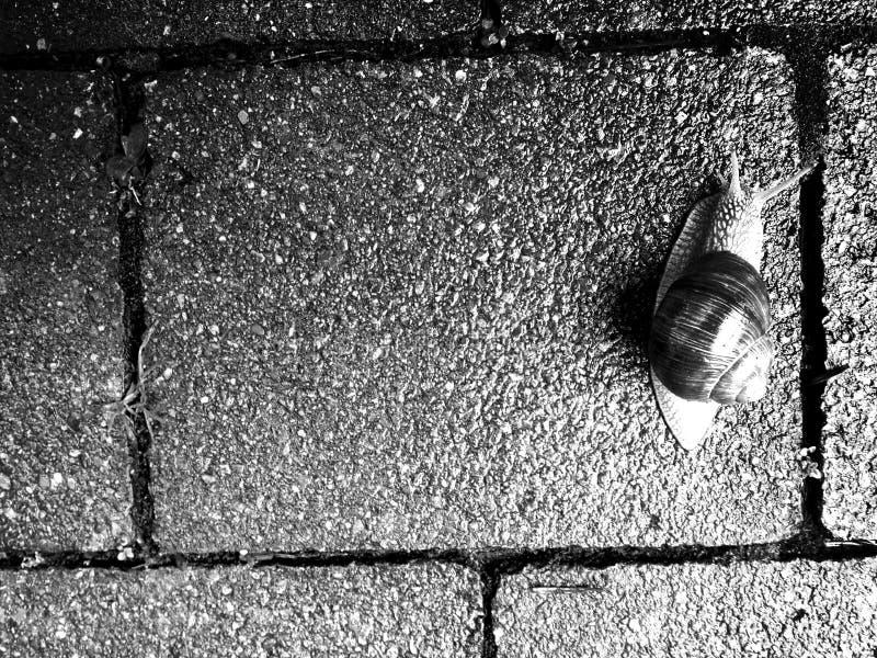 Lumaca lenta di giorno piovoso fotografia stock