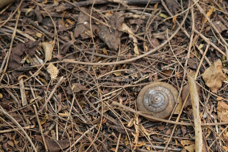Lumaca Shell sulla terra fotografia stock libera da diritti