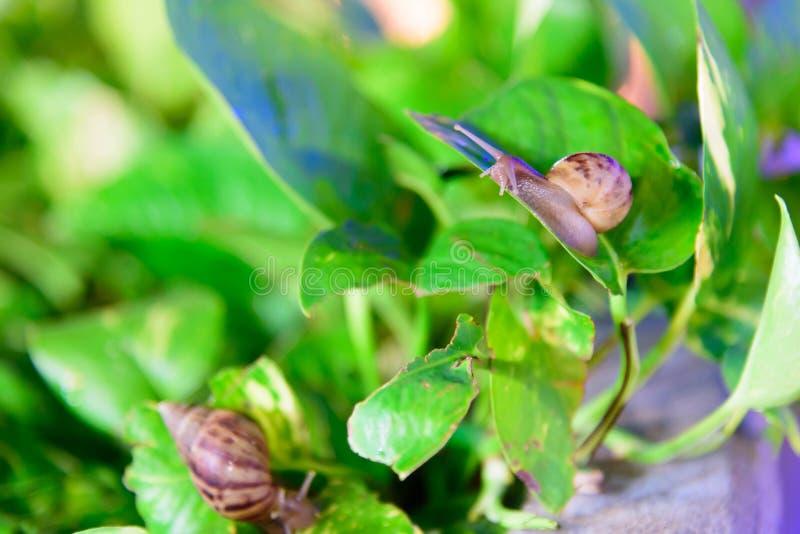 Lumaca sulla foglia verde fotografia stock libera da diritti