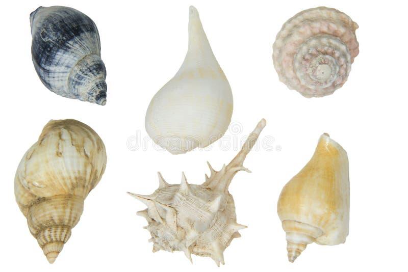 Lumache di mare su priorità bassa bianca fotografia stock