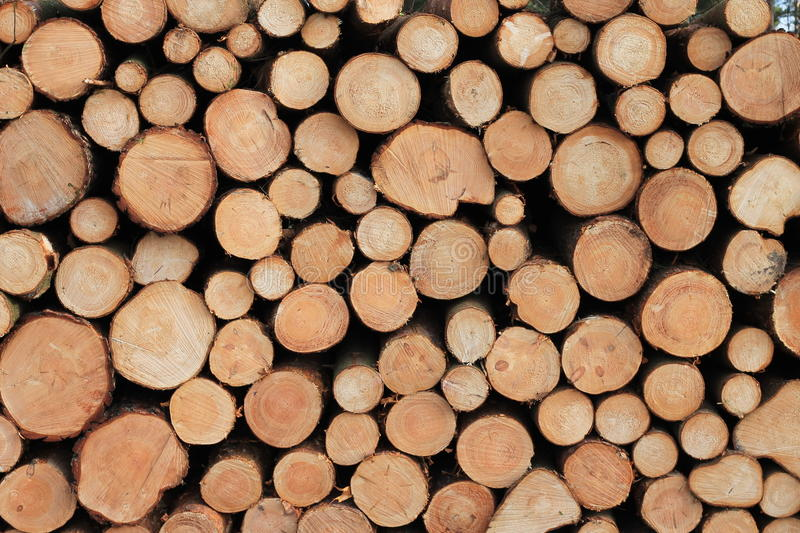 Lumber in the Forest stock photos