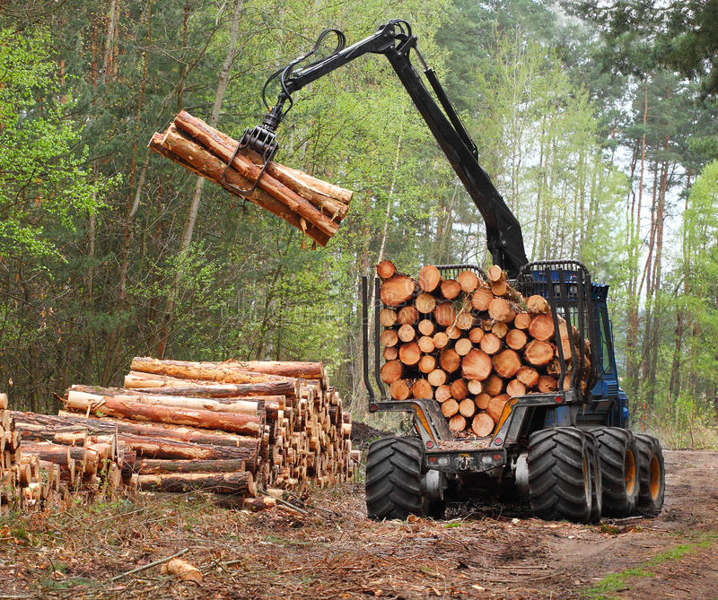 Download Lumber industry. stock image. Image of nature, background - 33306165
