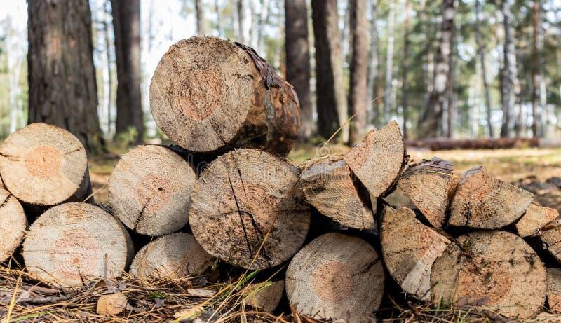 lumber. tecnolog?a fotografía de archivo libre de regalías